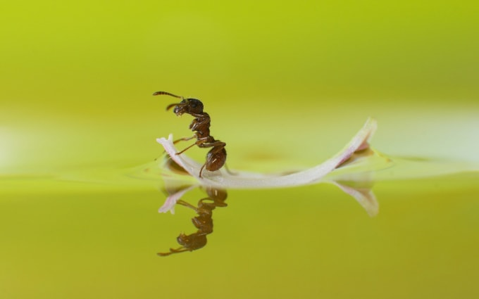 Valuable Education Your Child Can Receive Learning About Ants