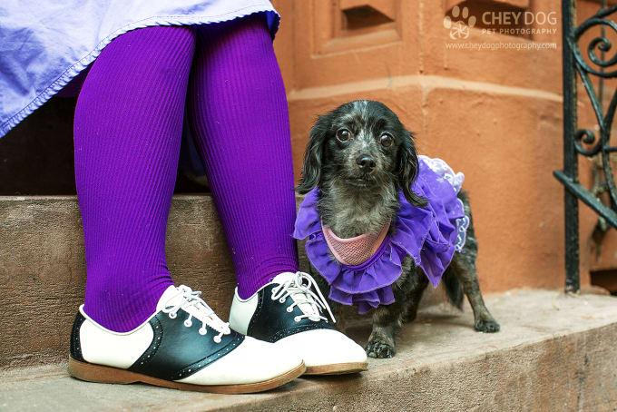 Best Pet Charities in New York City | Petlife