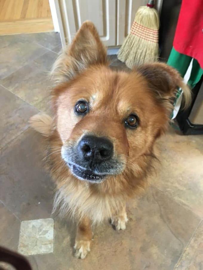 Why You Should Adopt a Senior Dog