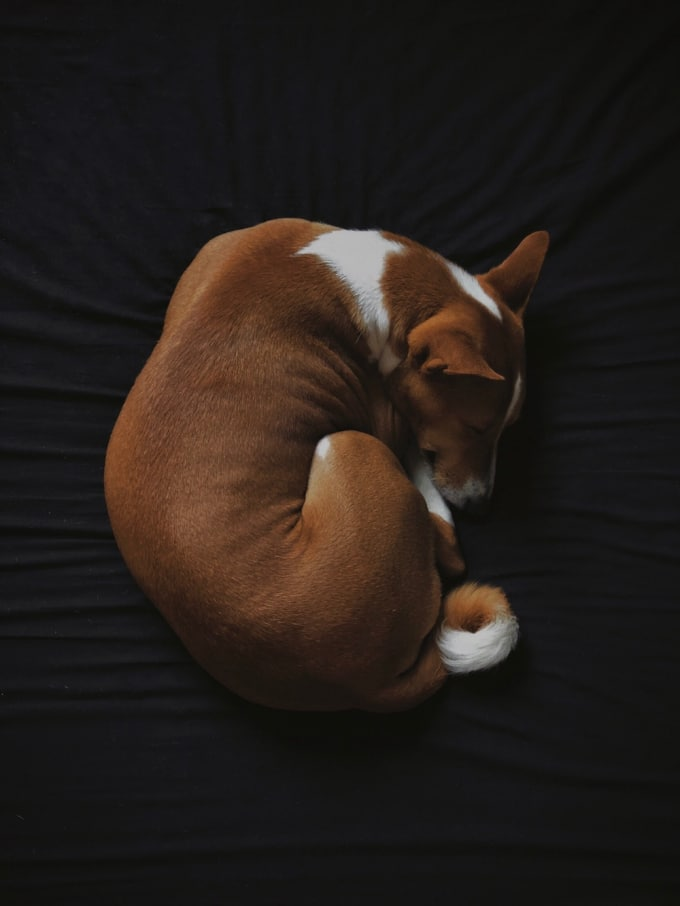 Dog Sleeping Positions & What They Mean | Petlife