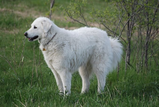 10 of the Most Loyal Dog Breeds | Petlife