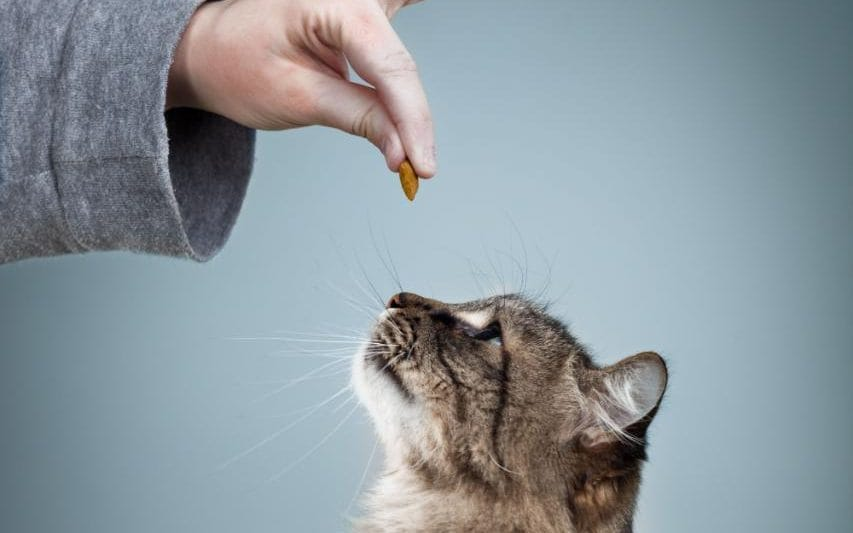 how to train your cat to do tricks