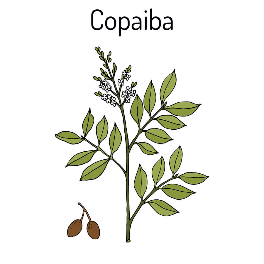 Using Copaiba Oil to Help Manage Meltdowns Associated with Autism