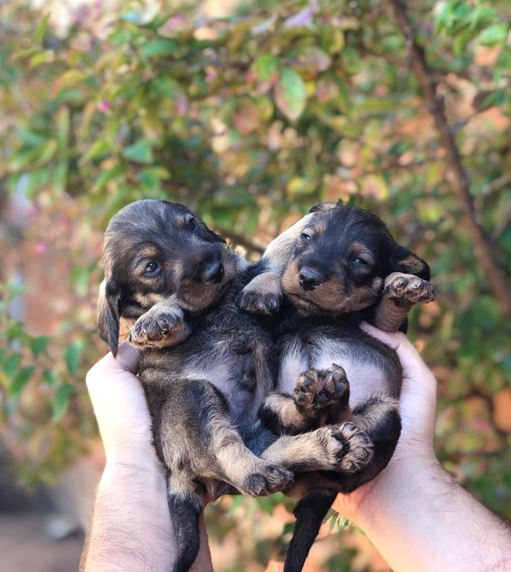 Knowing the Right Time to Sell Newborn Puppies