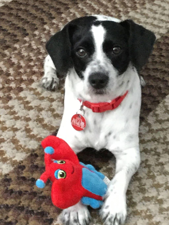 My Dog Buddy!