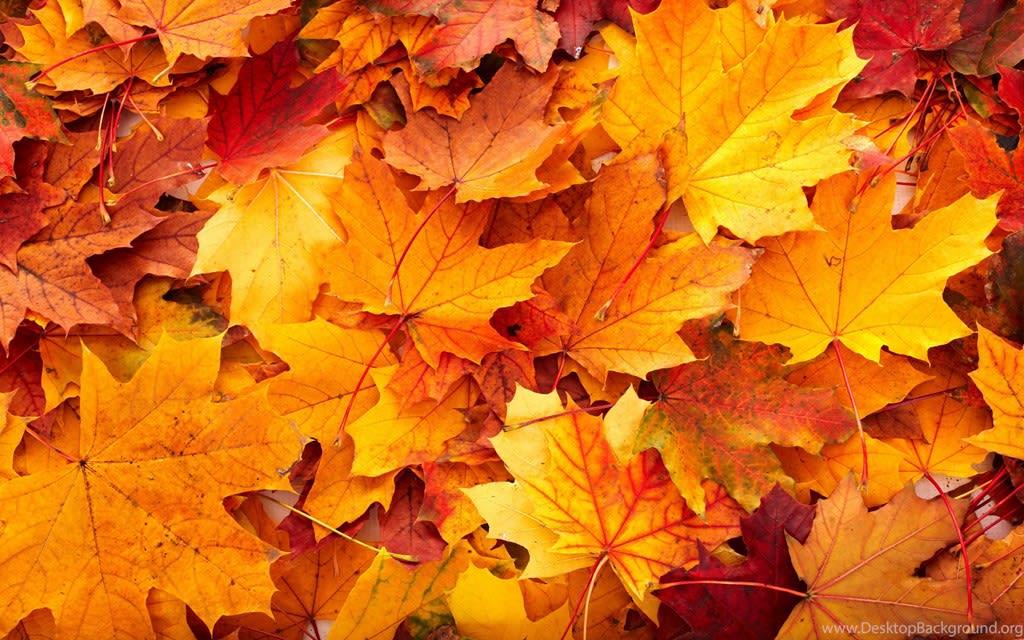 Autumn Trends