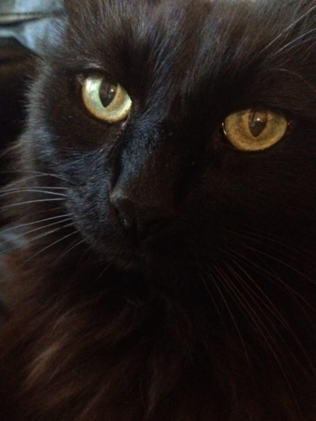 Black Night, Black Cat