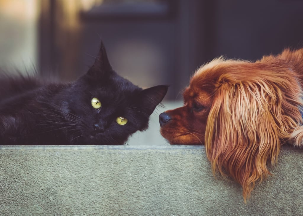 Are Dog and Cat People Really That Different?
