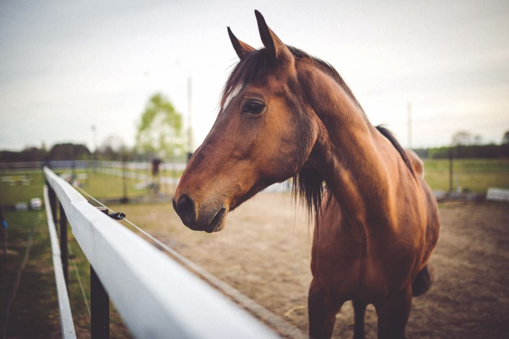 30 Interesting Horse Facts