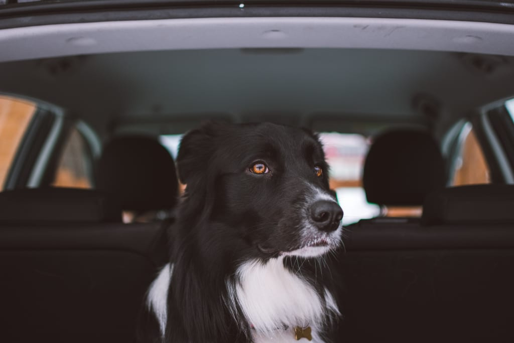Traveling with Pets: How to Prevent Motion Sickness in Dogs