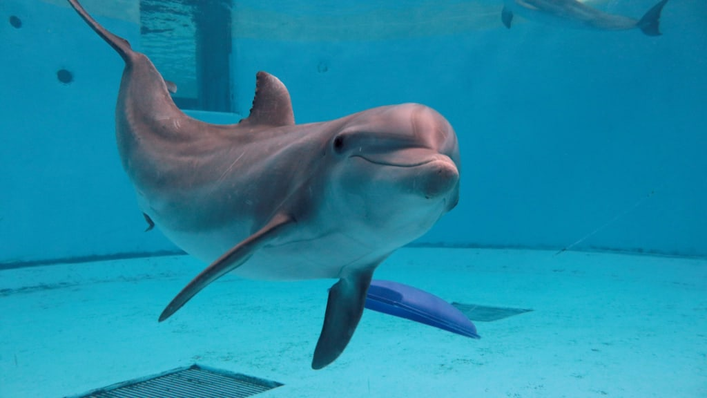 "Self-Proclaimed Marine Mammal ""Expert"" Targets Brookfield Zoo"