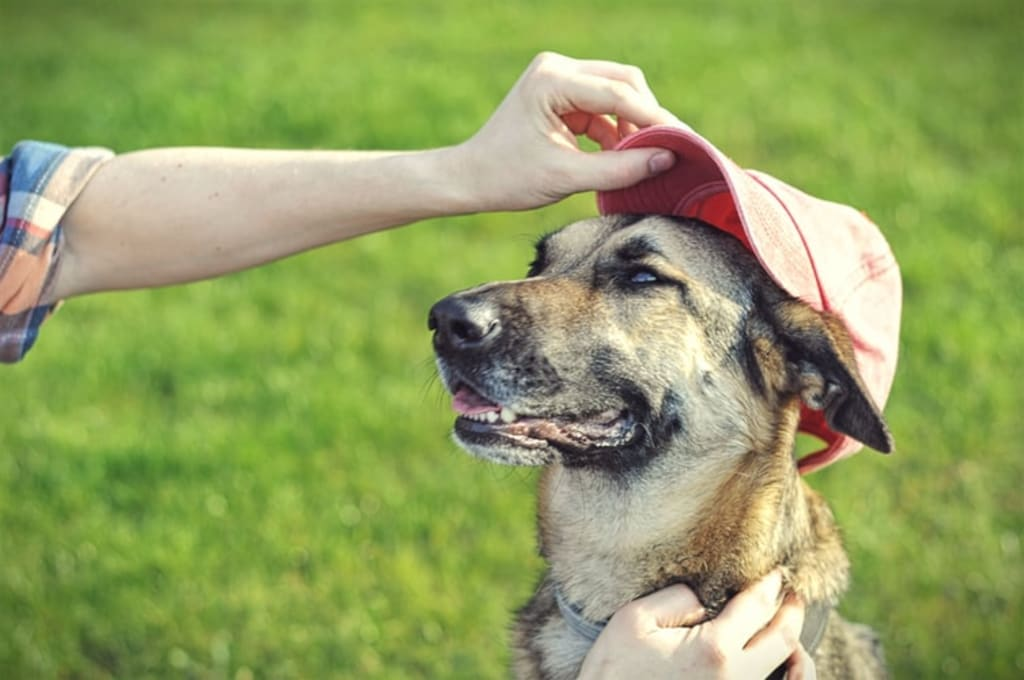 How To Take Care Of Your Dog When It's Hot?