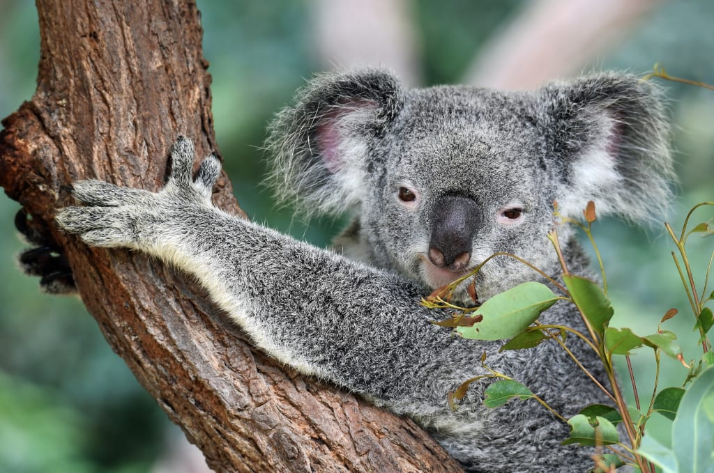 Care About Australia's Wildlife: Please Don't Give Money To PETA