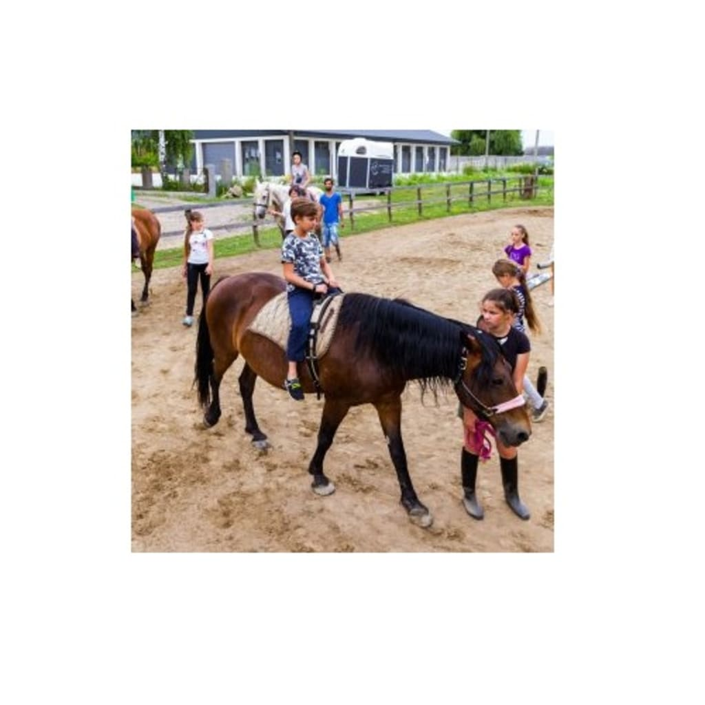 Top Places For Horse Riding In Adelaide