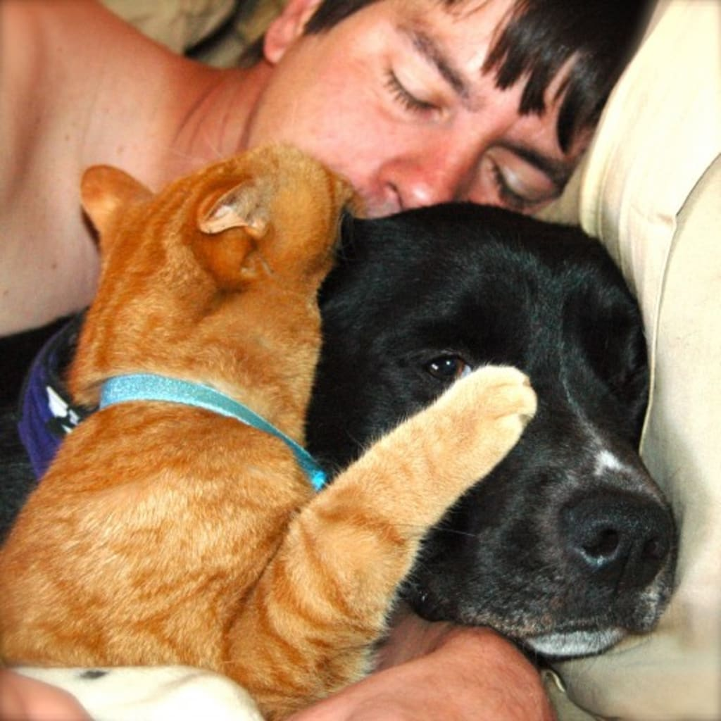 Can Dogs and Cats Live Together..?