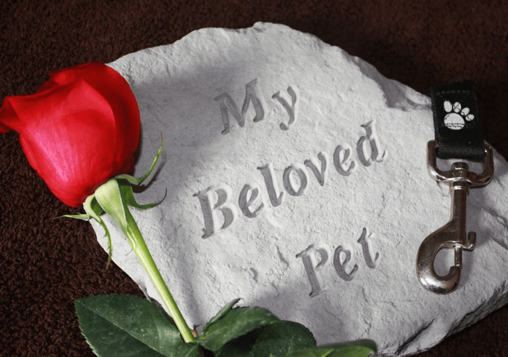 Grieving a Pet Can Be a Slow, Painful Process