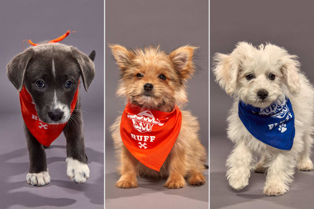 Puppy Bowl XVI will reign supreme on Super Bowl Sunday