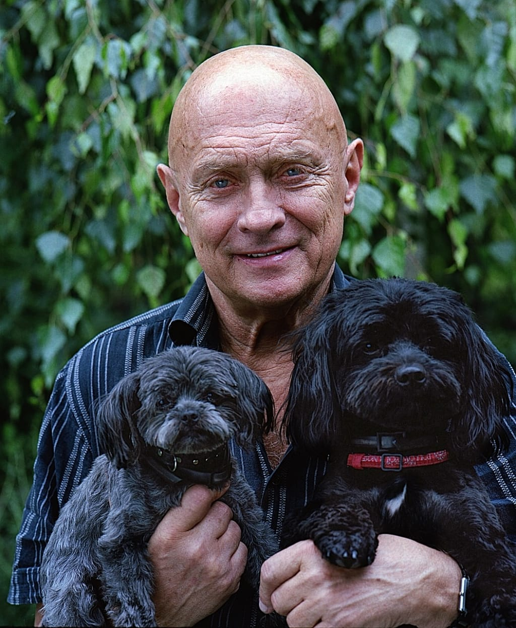 Aging: Finding Companionship and More in Dogs