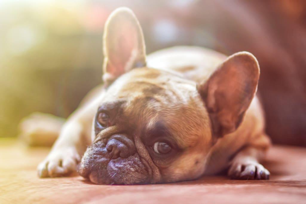 Who Keeps a Pet After a Divorce?