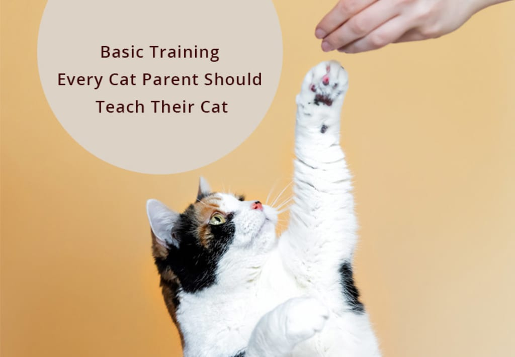 Basic Training Every Cat Parent Should Teach Their Cat