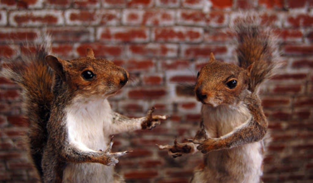 Tame Your Squirrel Brain: Conversation Tips for People With ADD
