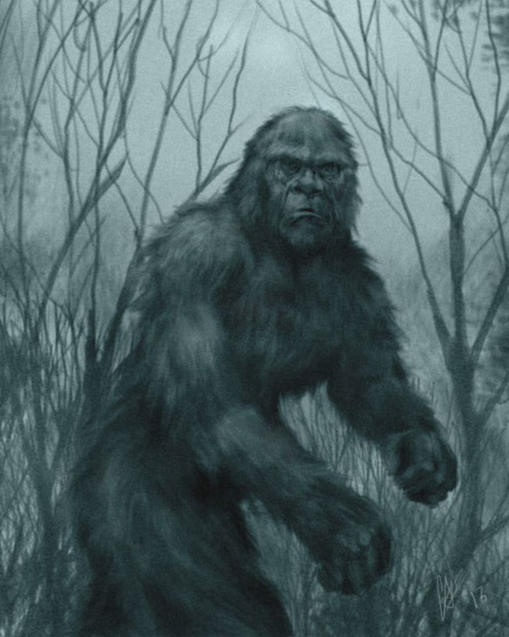 Bigfoot investigation