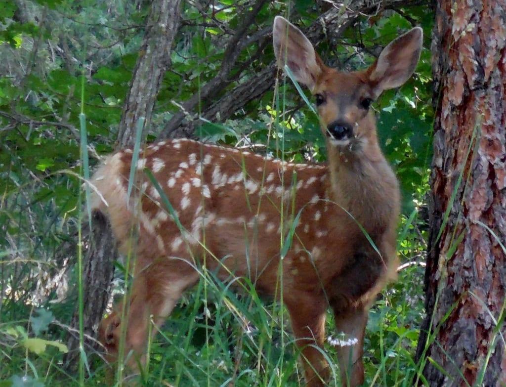 I Throw Rocks at Bambi