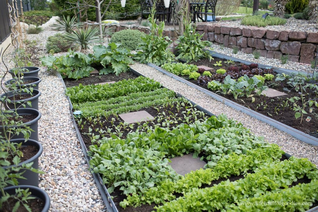 What our Gardens Should Look Like After 2020