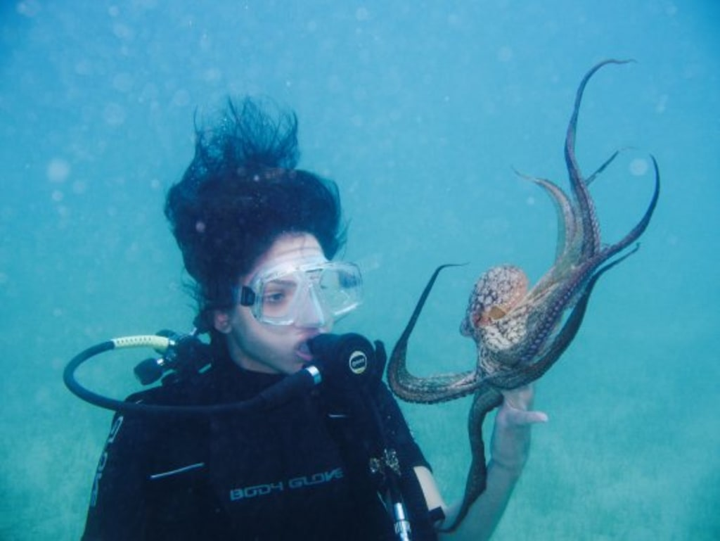 Unpopular Opinion: Octopuses are Underrated