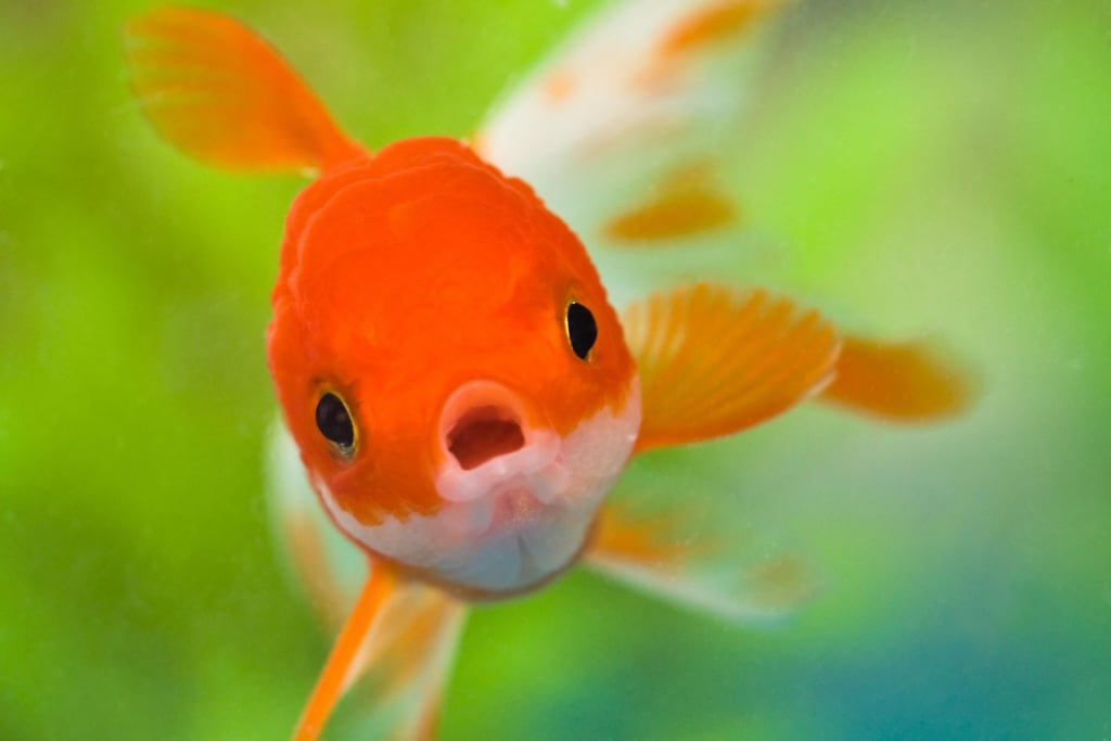 How fish began to live in the water (German fairy tale)