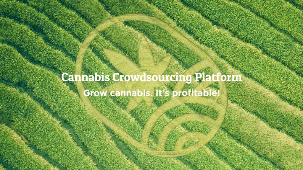 Why Grow Cannabis With Juicy Fields?