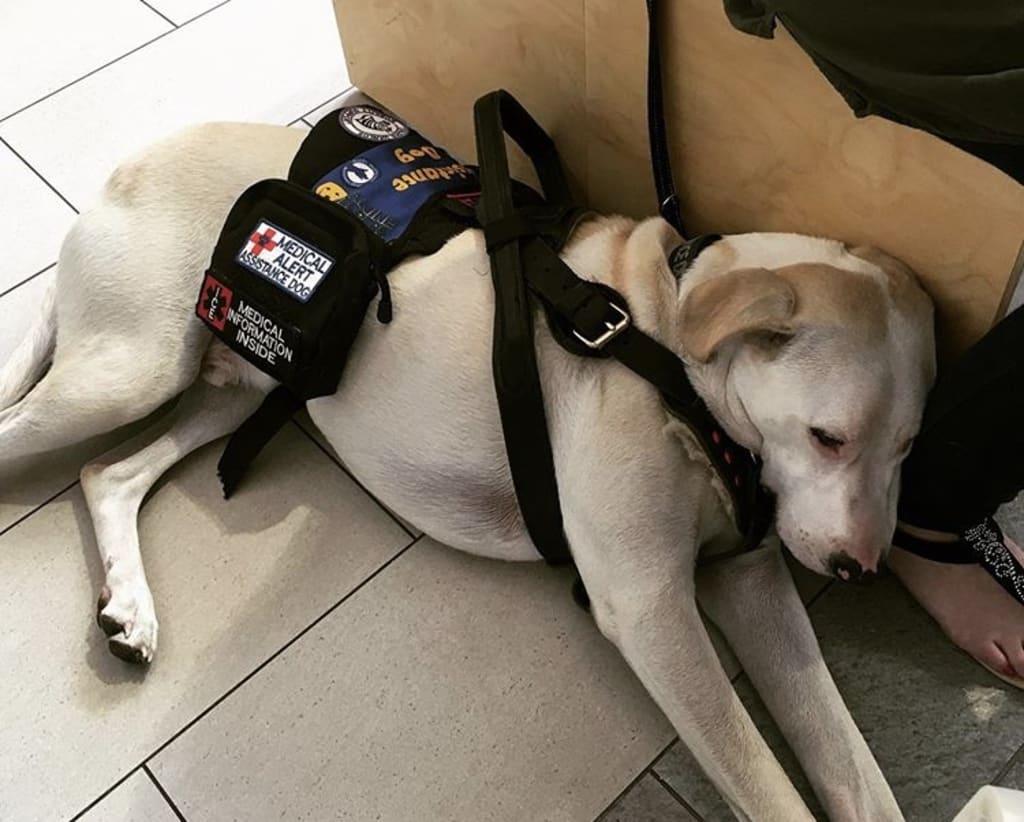 Calm dog in a public place