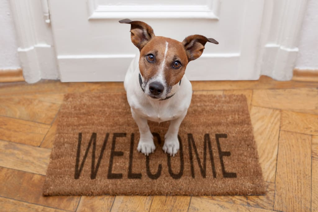 Tips for Buying a Home with Pets
