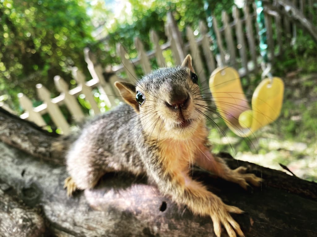 Lala The Squirrel