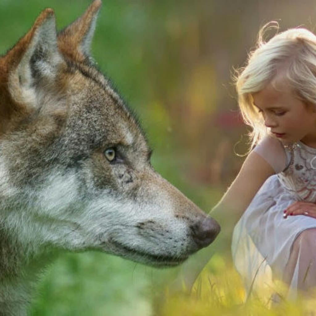 The story of how a wolf saved a boy.
