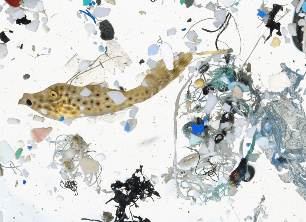 What are microplastics and what do they actually do?
