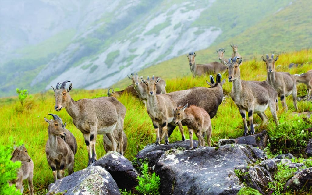 Top 4 Wildlife Sanctuaries in Kerala
