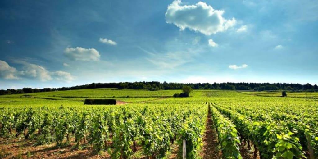 Pinot Paradise