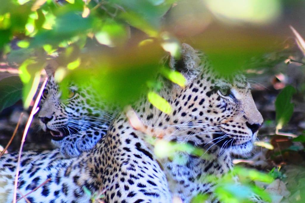 How to plan an affordable Botswana safari