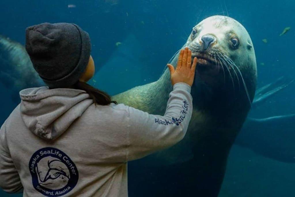 Alaska SeaLife Center On the Brink of Closing Down