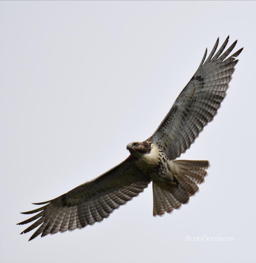Bird's Eye View.