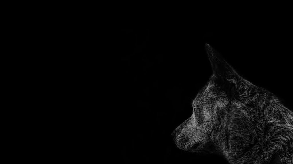 Custom Pet Portraits: How It Works