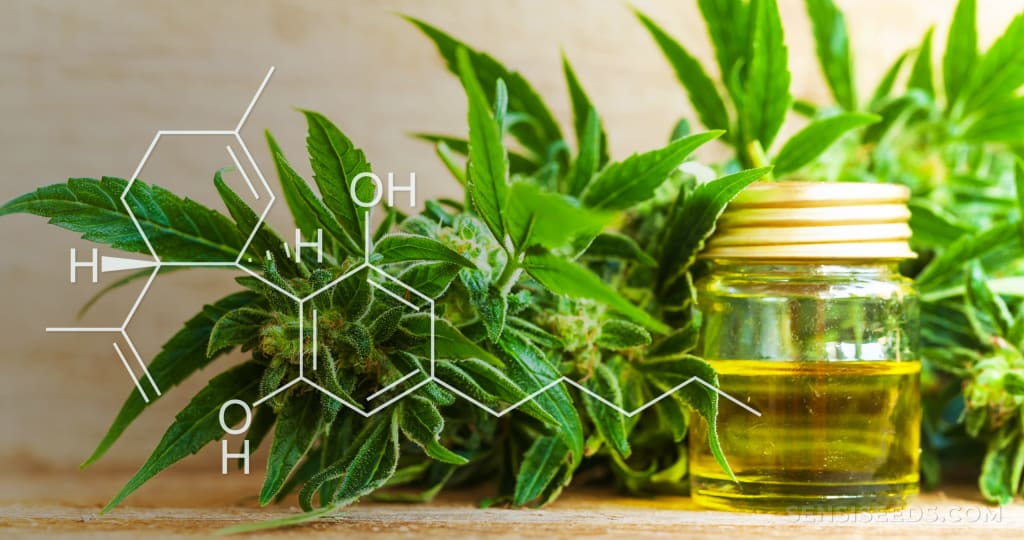 How Does CBD Oil Work? Discover Ideal Dosage for Best Effect on Your System