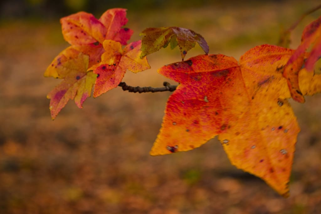 The Cool Colors of Fall