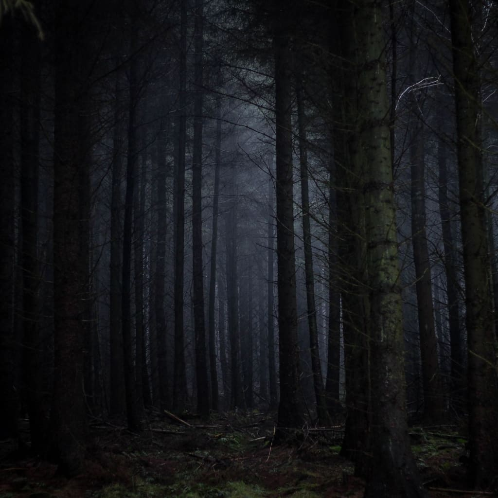 The forest of the damned