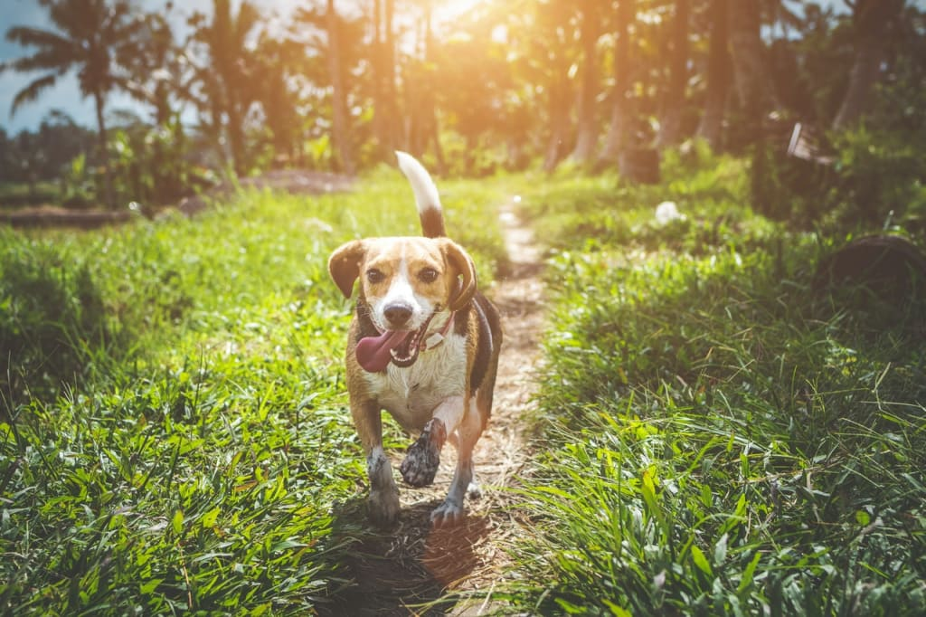 6 Tips on How to Encourage Your Dog to Exercise More