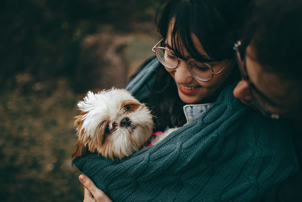 10 Tips for Taking Care of a New Pet