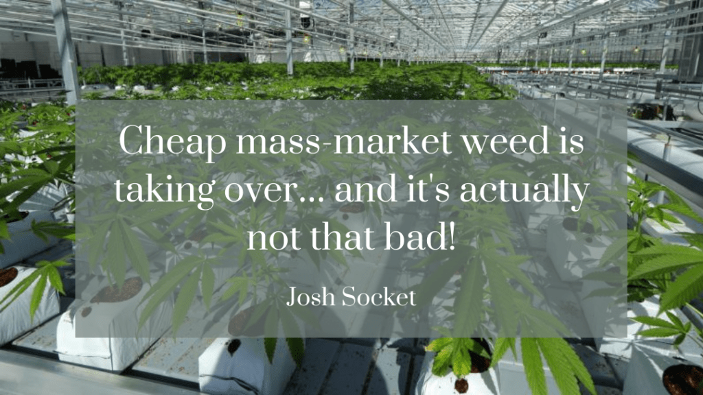 Cheap mass-market weed is taking over… and it's actually not that bad!