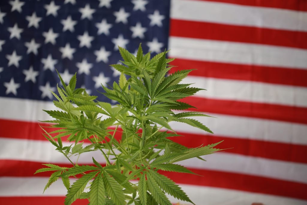 Cannabis Sales Hit $222 Million, Becomes State's Most Valuable Crop