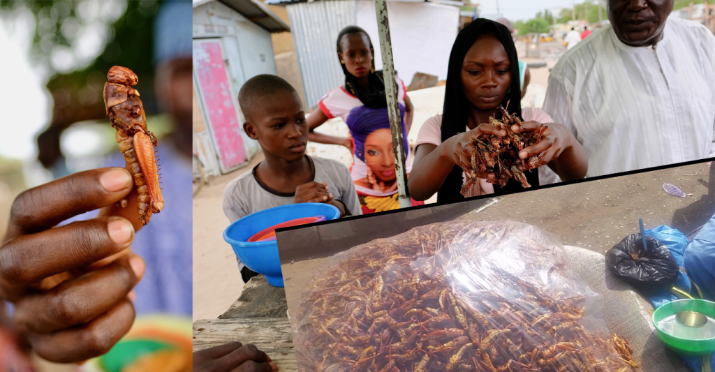 Meet The Nigerians Making N30,000/Day Selling Grasshoppers